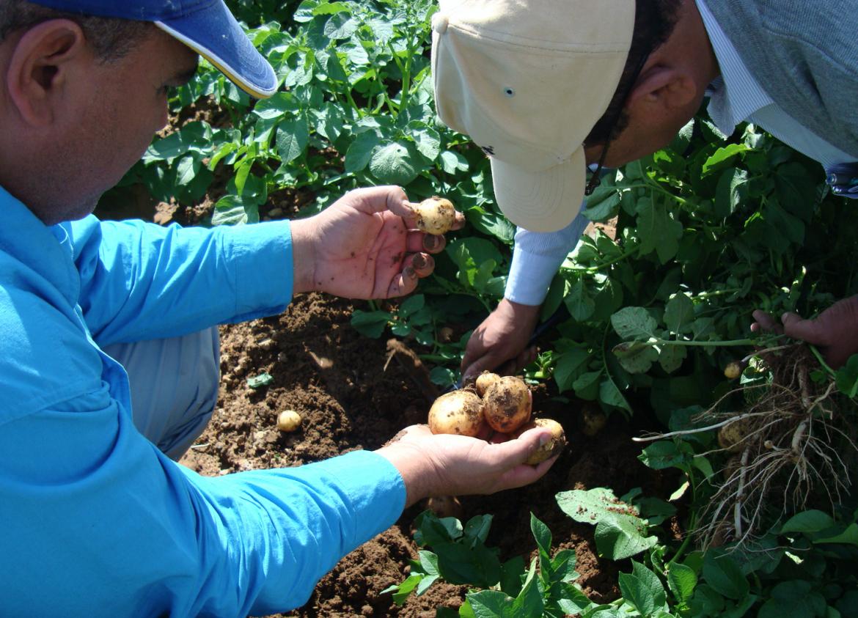 hermes potato seed soil selection